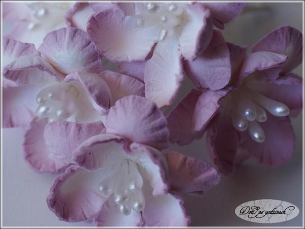 Kwiatki14