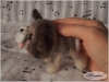 amigurumi_kitten03